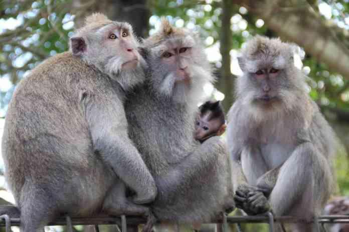 Ubud Moneky Forest in Bali