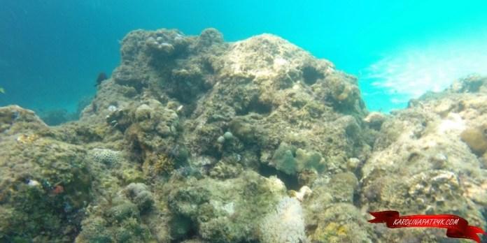 Coral Reef in El Nido