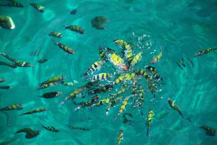 Fish in the Thai sea