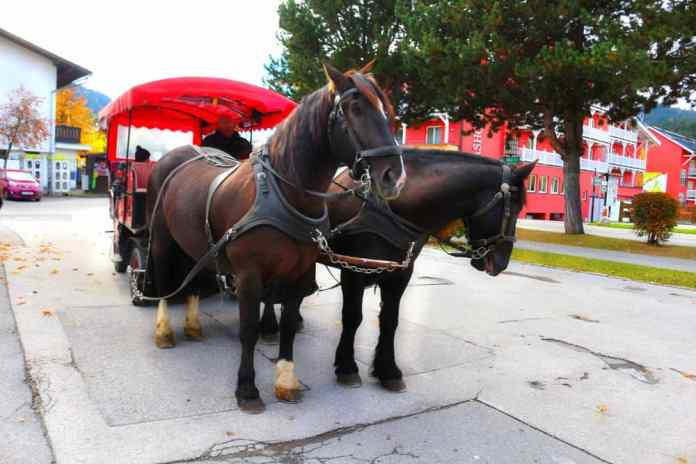 Horse-drawn carriage Olympiaregion Seefeld