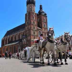 horses in the krakow centre