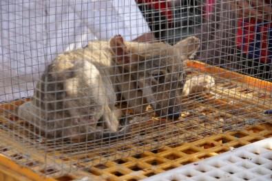 Neben Gänsen und Kaninchen werden auch andere bemitleidenswerte Tiere verkauft…