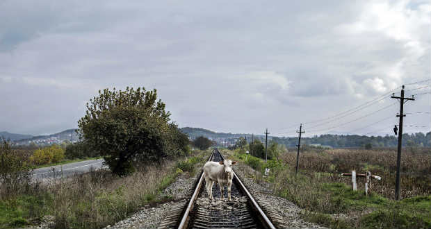 Valóságok párbeszéde: A tehén története