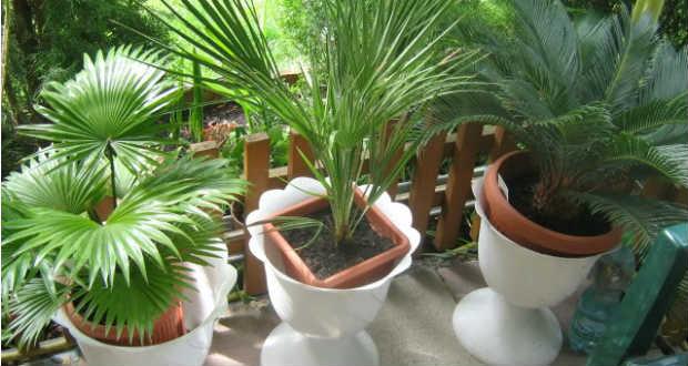 Tegyük ki a szabadba: A nyári meleget jól bíró szobanövények