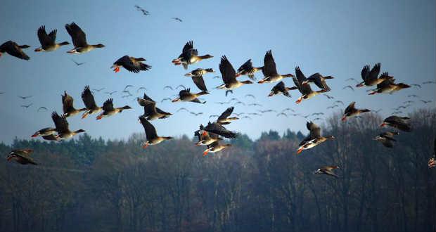 Vészesen csökken a madárpopuláció