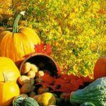 A sütőtöktől a gesztenyéig: őszi kedvencek a konyhában