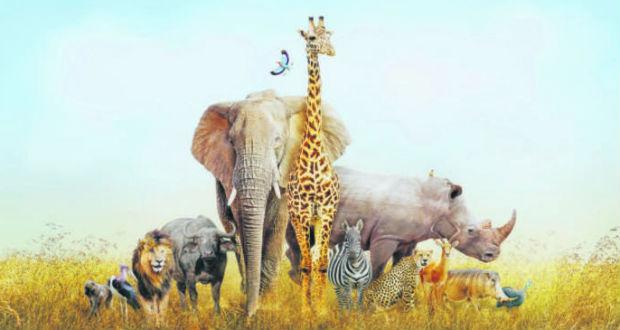Újabb veszélyeztetett fajokat vonhatnak be az ENSZ-egyezménybe