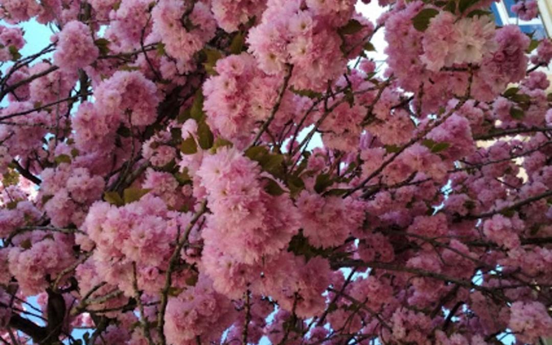 Hétezer fát ültettek az elmúlt öt évben Munkácson