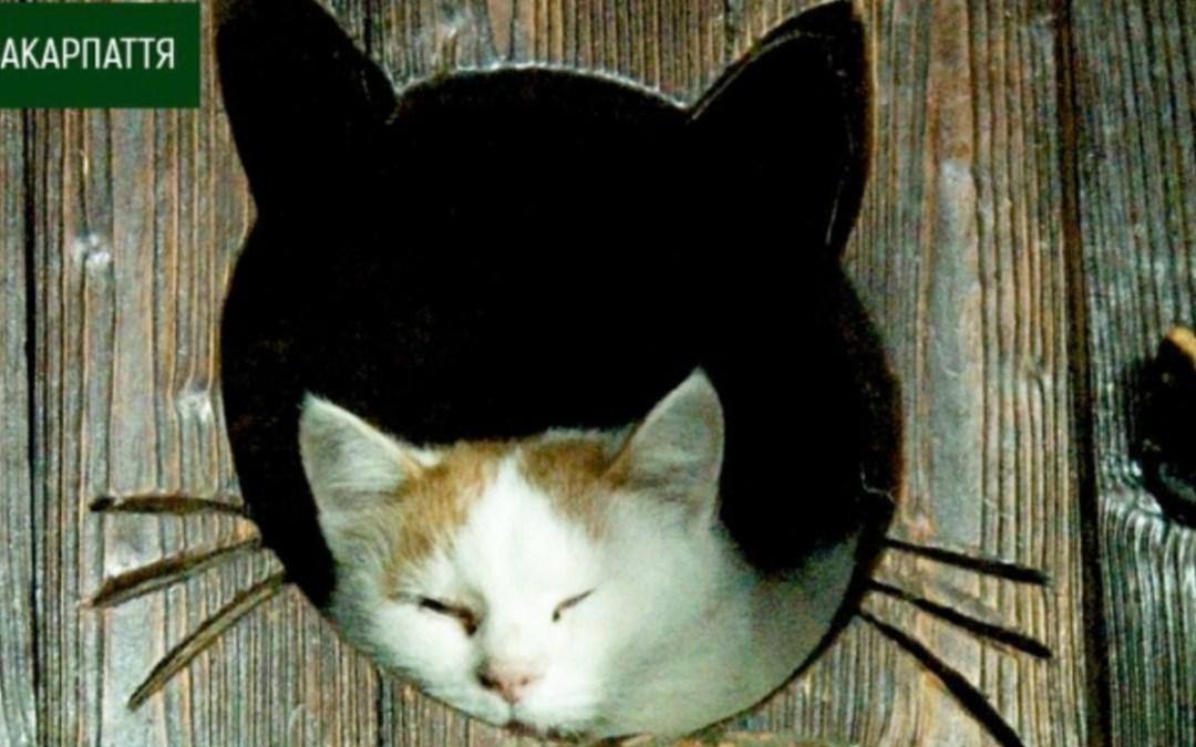 Kárpátalja ma: több mint száz macska él egy padóci szállodában
