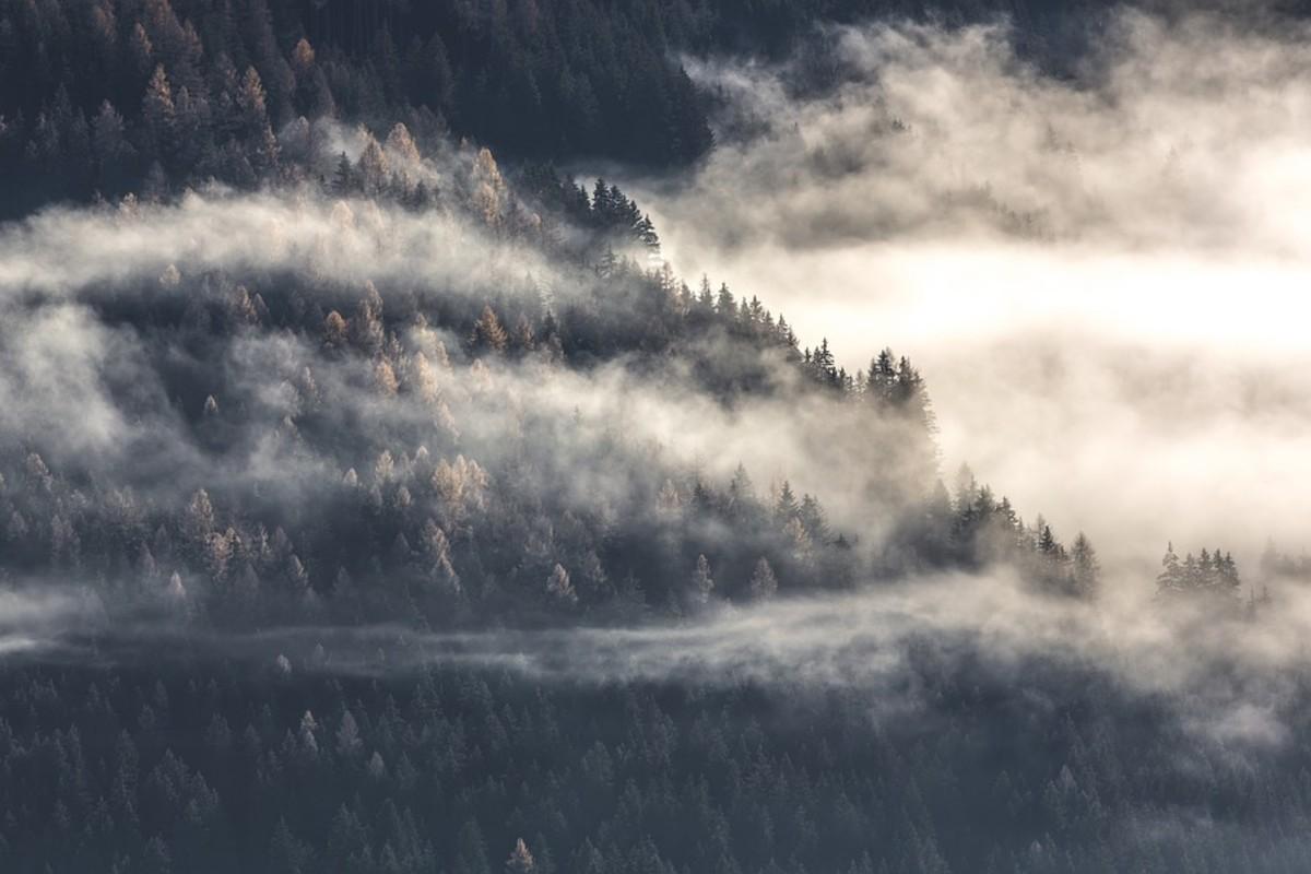 köd erdő