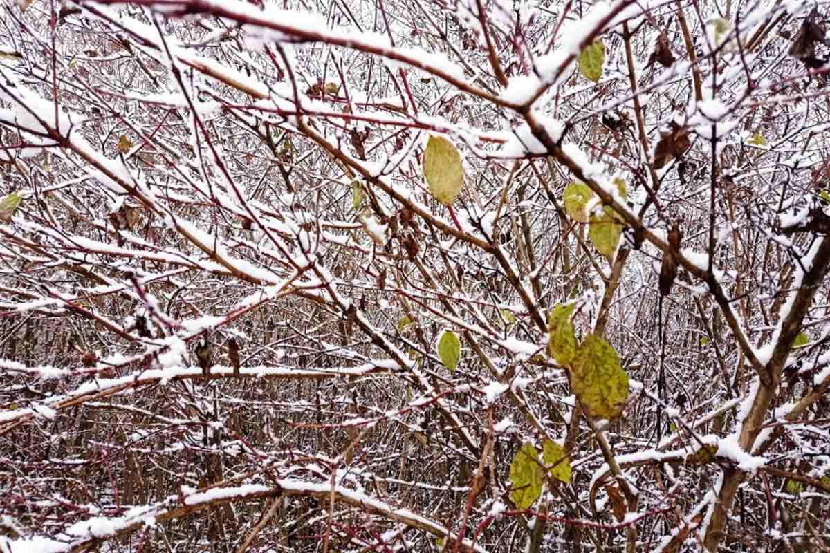 tél hó fa