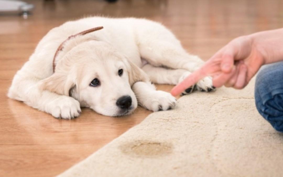 A büntetés így hat a kutyákra
