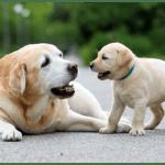 Több mint 1 millió hrivnyát különítettek el a tavalyi évben Munkácson a kóbor állatok megsegítésére
