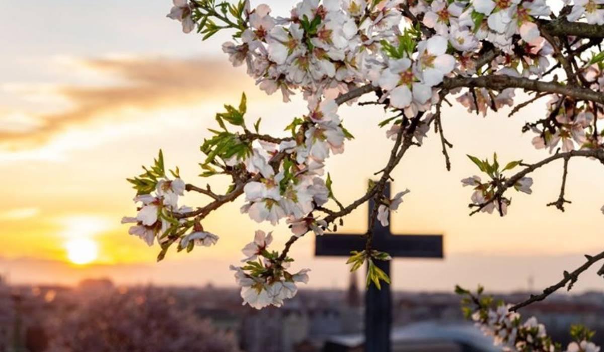kereszt virágzó fa