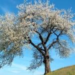 Simon István: Tavaszi egyveleg
