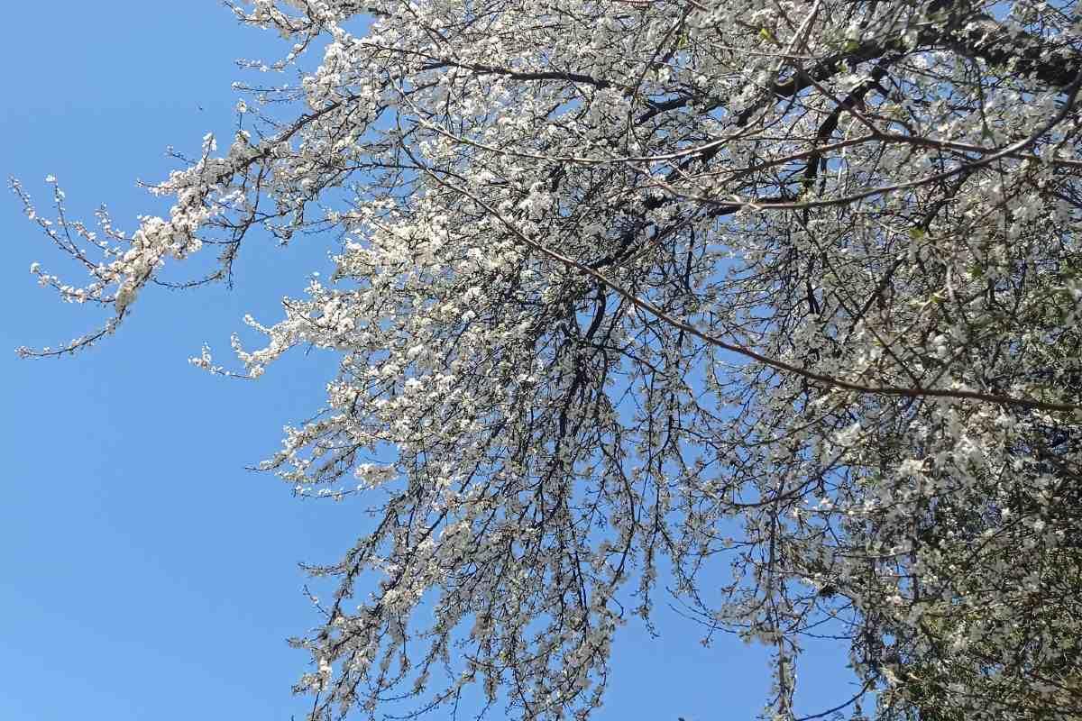fa virágzás
