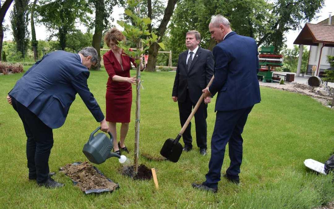 Дерево національної приналежності було висаджено у дворі особняка культури ім.  Перені