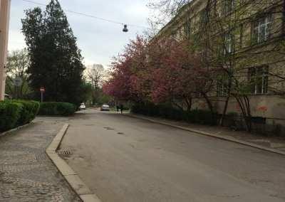 Отдых в Карпатах весной