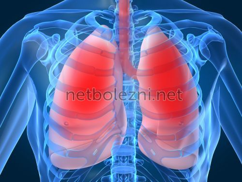 Hälsosam lungman