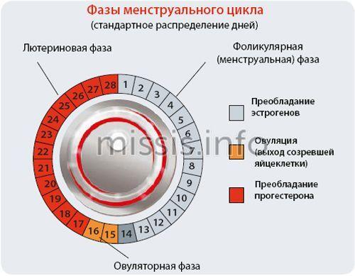 Caractéristiques de la fonction menstruelle