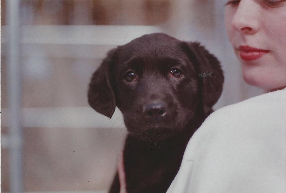 https://karriezylstramyton.com/wp-content/uploads/Shelter-Pup-1993.jpg