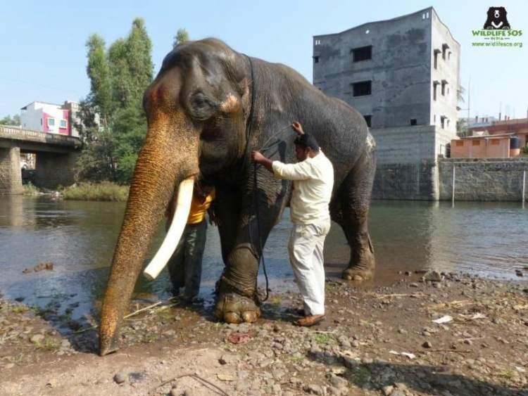 Image credit: Wildlife SOS India