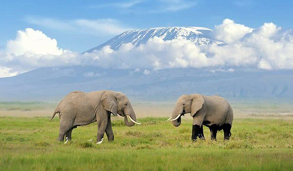 elephants-karryon-tanzania