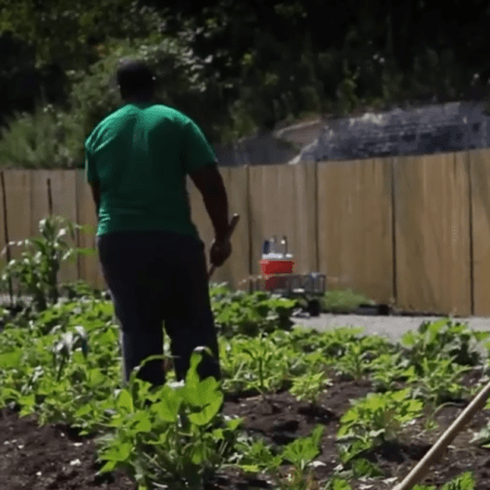 Screenshot of teens working in the Gary Comer Youth Center garden