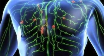 Ανακαλύφθηκε νέο άγνωστο όργανο στο ανθρώπινο σώμα