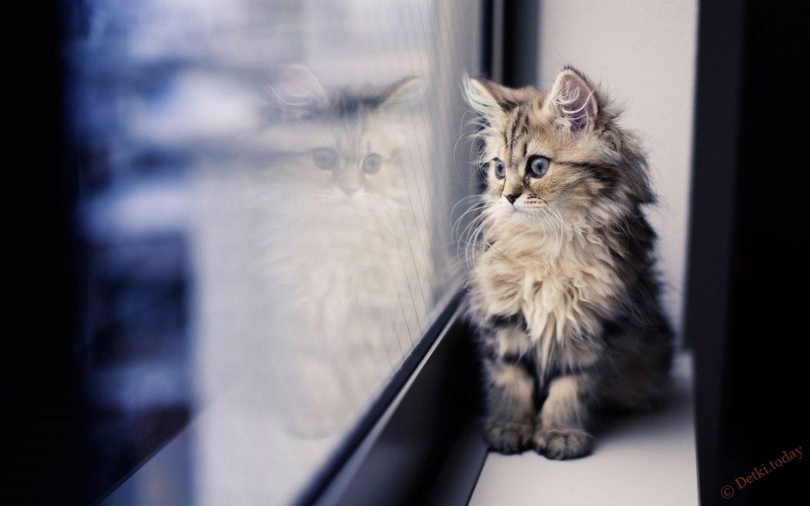 Tvrdé mačička striekať