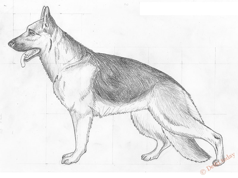 Картинки как нарисовать собаку немецкую овчарку