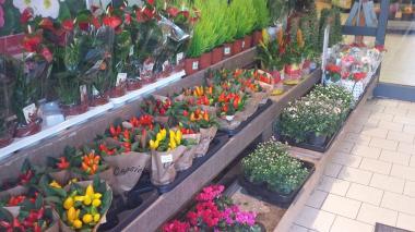 Flores en la entrada de un supermercado Rewe