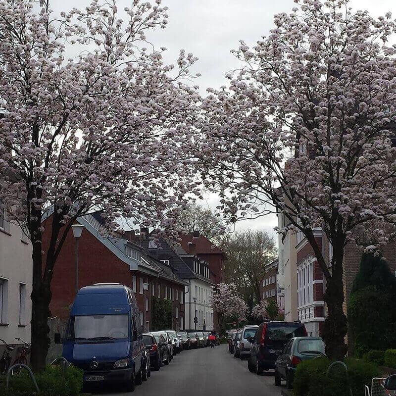 Primavera en Münster