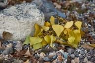 Blätter und Muscheln