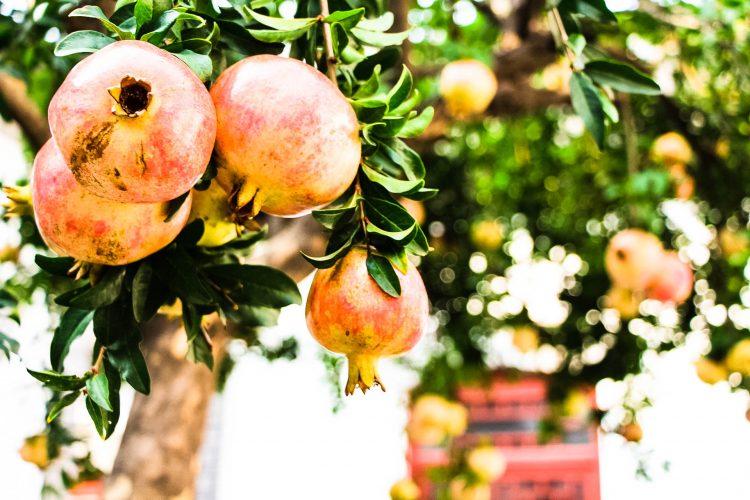 Granatapfel-Exotische-Früchte-in-Thailand-18-Sorten-die-man-probieren-muss-83d