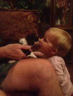 Havanese puppy kisses baby girl on the mouth