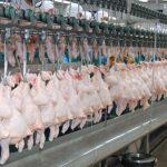 ซีพีเอฟโกยส่งออกไก่เนื้อ5หมื่นล้าน