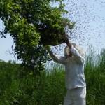 """""""ไททา""""วางเป้าปี62 เตรียมลุย 3 แผนงาน หนุนเกษตรกรเลี้ยงผึ้งปลอดภัย"""