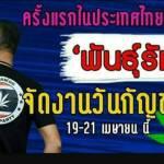"""2 งาน """"วันกัญชาโลก""""ครั้งแรกในไทย ในยุค""""กัญชาฟรีเวอร์"""""""