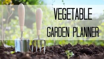 Getting The Ball Rolling: 5 Tips for Starting a Vegetable Garden