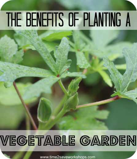Benefits of planting a vegetable garden