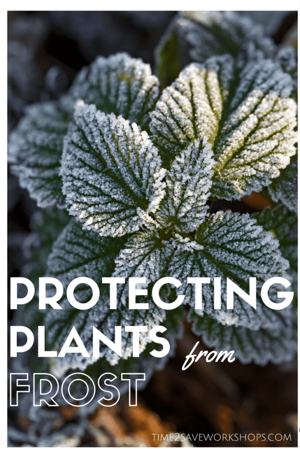 protecting-plants-from-frost