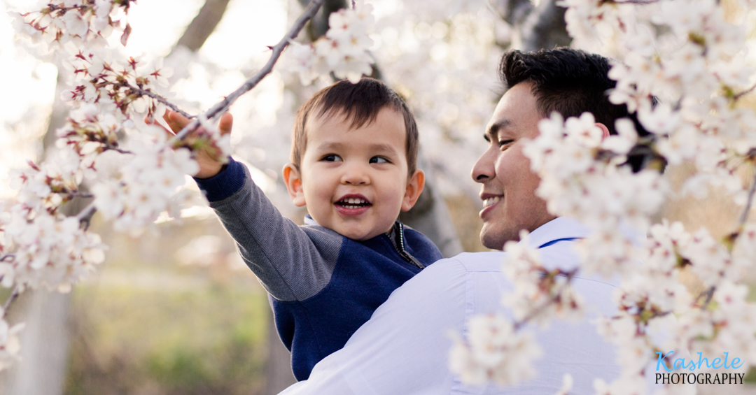 Little boy reaching for a branch of blossoms in his daddy's arms at the International Peace Gardens