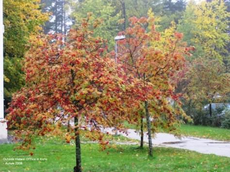 Kista autumn 3