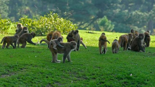 Previewing Picture:  It is no monkey land. But most of them do make their presence felt in Brenwar. There are Gujjar and Bakerwal populations who live here.
