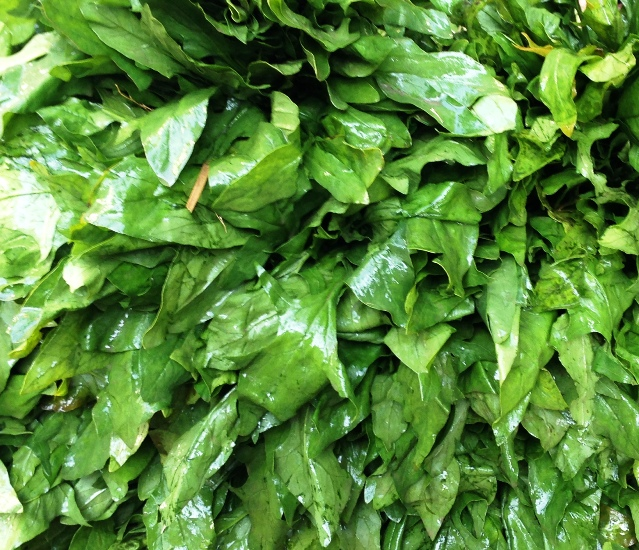 Kashmiri Spinach: The most expensive vegetable in the market.