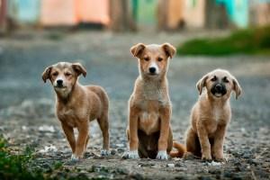 Of Dogs, Faith and Imams