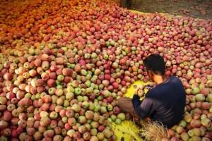 'Azadi', 'Pro-Pak' Slogans Written On Apples From Kashmir
