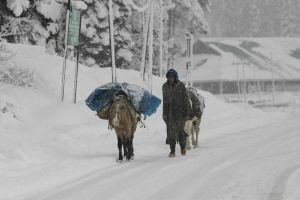 Fresh Snowfall In Upper Reaches, Rain In Plains