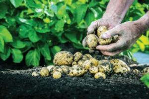 Organic Farming Brings A Breath of Fresh Air in Kashmir